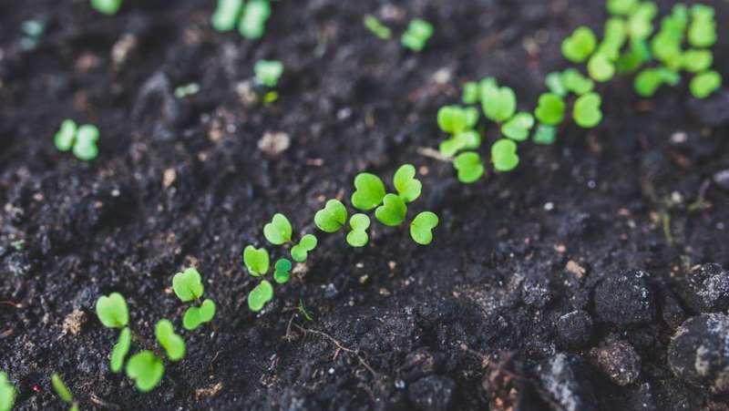 Органічне землеробство як альтернатива зменшення хімічного навантаження на довкілля