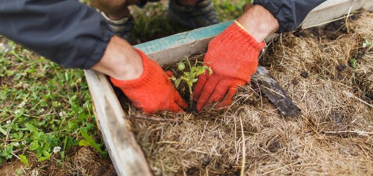Альтернативні методи ведення сільського господарства.